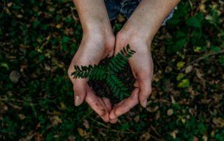 groen, duurzaam, blaadjes, hand